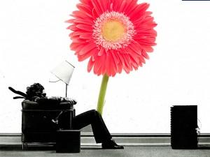 Fotomural Decorativo Gerbera Rosa