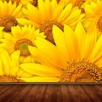 sunflower-field-3