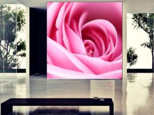 Fotomural Decorativo Rosa Pastel