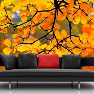 Fotomural Decorativo Naturaleza Naranja