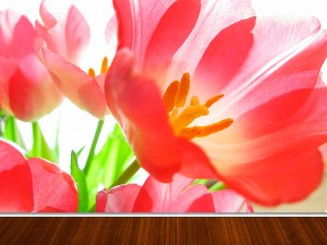 Fotomural Decorativo Flor de Luz