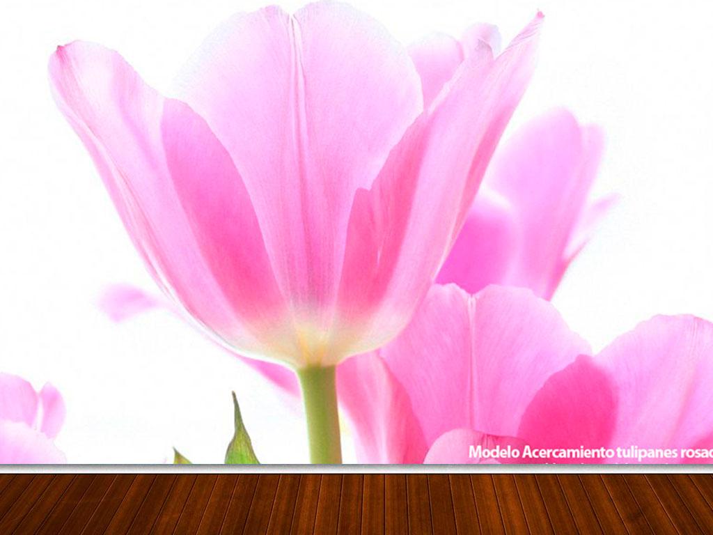 fotomural-tulipanes-3