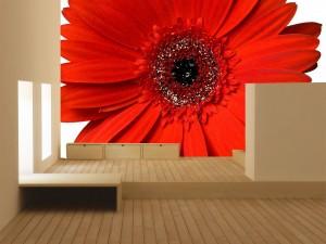 Fotomural Decorativo Gerbera Roja