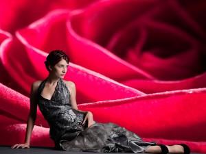 Fotomural Decorativo Rosa Roja