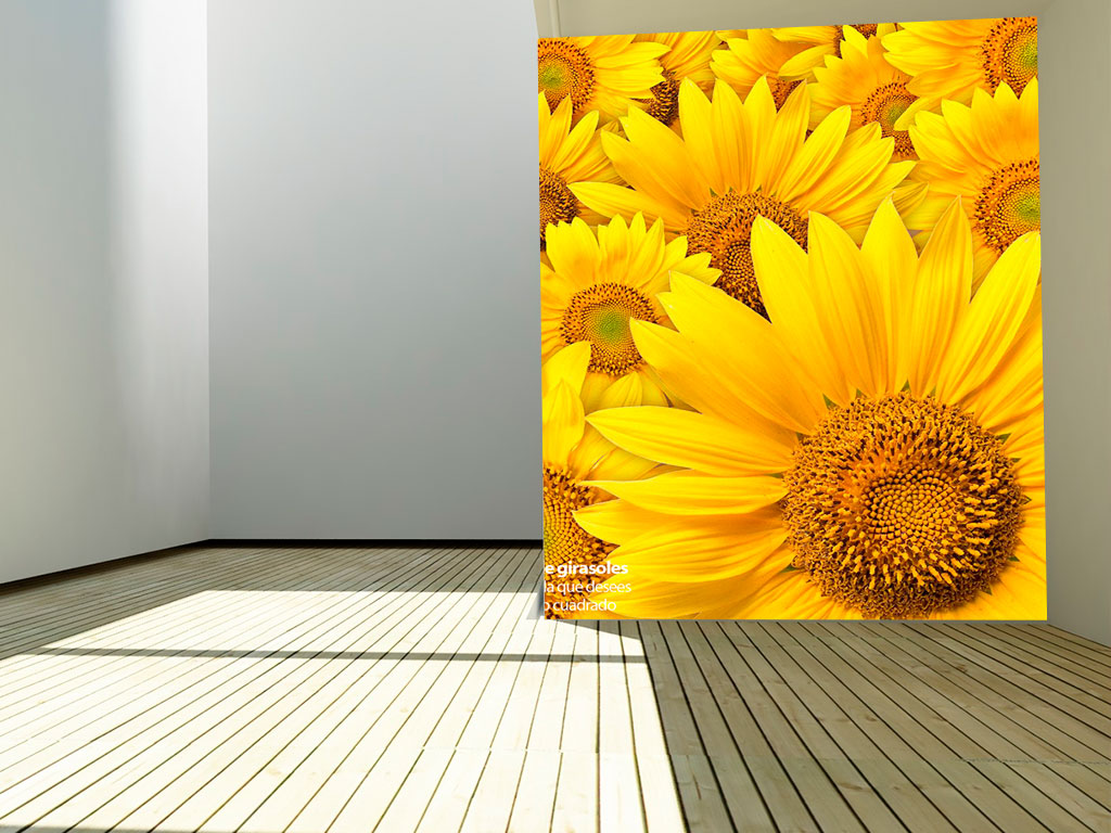 sunflower-field-2