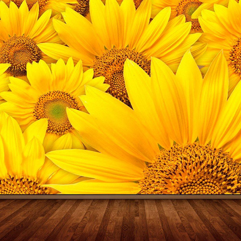 sunflower-field-3