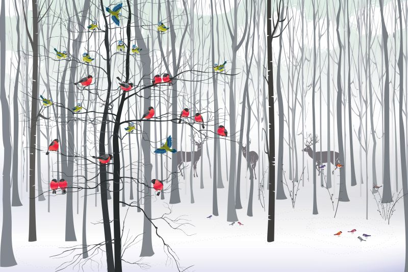 Colibrís en el Bosque
