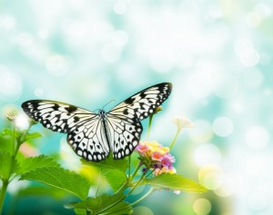 Fotomural Decorativo Baño: Mariposa Blanca
