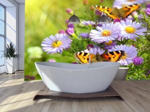 Fotomural Decorativo Baño: Margaritas y mariposas