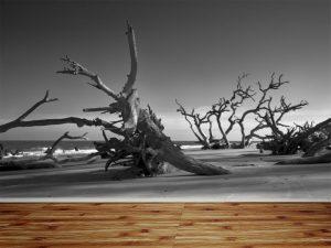 Fotomural Decorativo para  Sala: Naturaleza Muerta