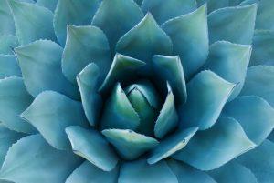 Fotomural Decorativo para Sala: Flor Azul Intenso