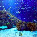 peces en el oceano
