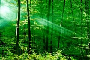 Fotomural Decorativo para Dormitorio: Verdes Naturales