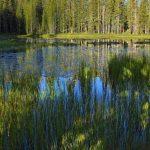 reflejo laguna
